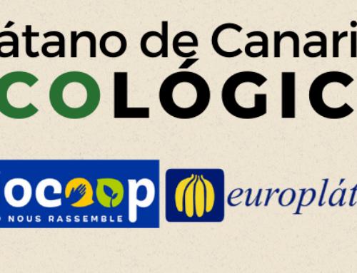 Europlátano posiciona al plátano ecológico en Europa.