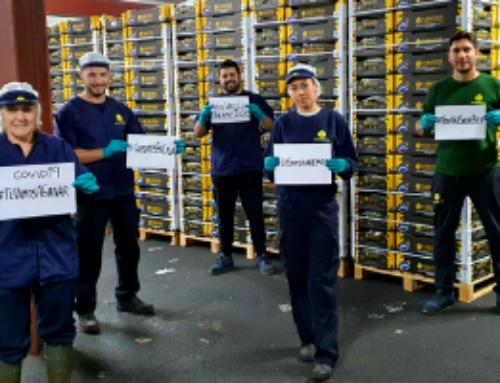 Europlátano agradece el esfuerzo y compromiso de sus trabajadores