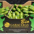 Europlátano continúa creciendo en el mercado europeo.